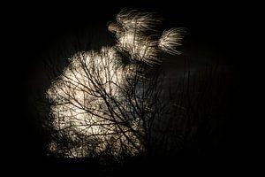 Vuurwerk achter een boom