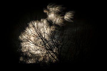 Vuurwerk achter een boom van Kees van der Rest