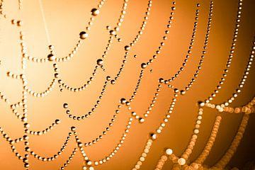 Spinnenweb met dauwdruppels von Peet Romijn