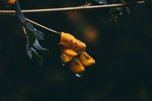 Bloem in de regen
