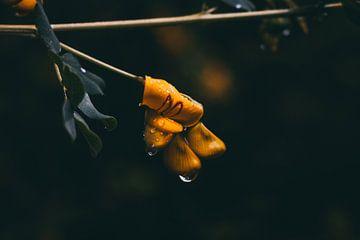 Fleur sous la pluie sur