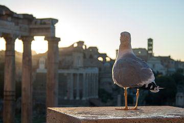 Romeins uitzicht van Fabian Teesink