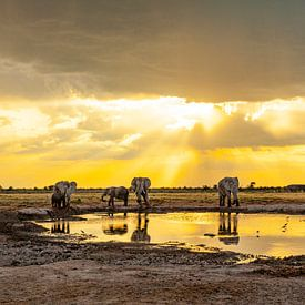 Olifanten - Ontmoetingsplaats waterpoel van Ursula Di Chito