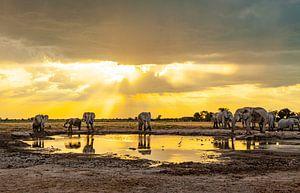 Olifanten - Ontmoetingsplaats waterpoel