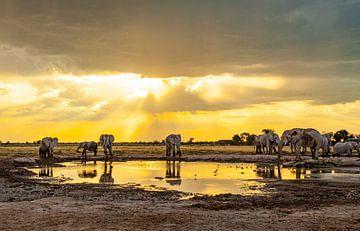Elefanten - Treffpunkt Wasserloch von Ursula Di Chito
