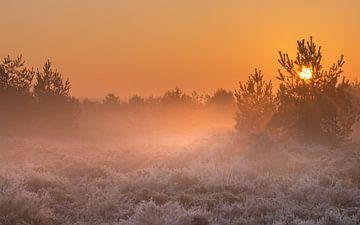 Het zonnetje met de mistbanken over het Aekingerzand van