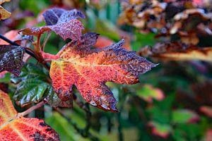 Prachtige herfstkleuren van