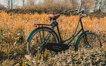Fahrrad auf dem Blumenfeld von Photography by Naomi.K