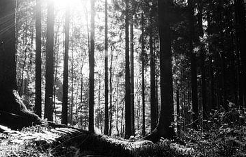 Magisch bos van Jacqueline Sinke