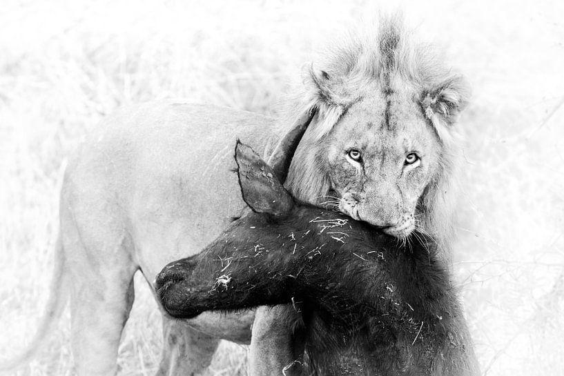 Lion Kill van Thomas Froemmel