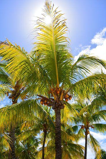 Palmbomen met zon op Mauritius van Stefanie de Boer