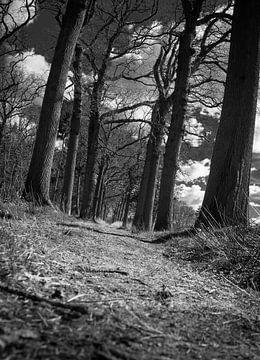lower path van Ettie van der Meulen
