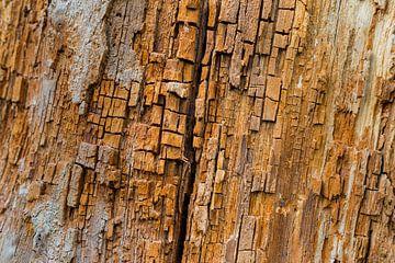 Structuur van een dode boom van Jenco van Zalk
