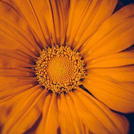 Oranje bloem van Stedom Fotografie
