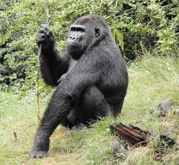 Gorilla van Richard Brinkman