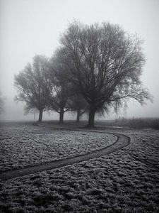 Voetpad langs enkele bomen in de mist