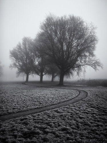 Voetpad langs enkele bomen in de mist van