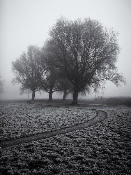 Voetpad langs enkele bomen in de mist van Paul Beentjes