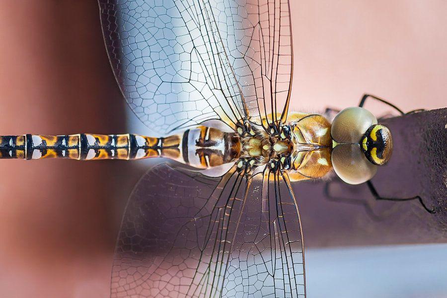 Libelle van Nanouk el Gamal - Wijchers (Photonook)