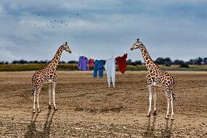Het drogen van de was in Afrika