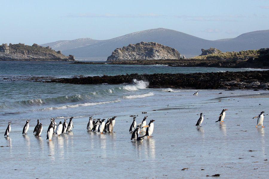 Pinguïns op het strand van Carcass Island van Antwan Janssen