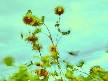 Sonnenblumen im Wind 8 van