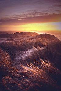 Vue sur les dunes du Danemark