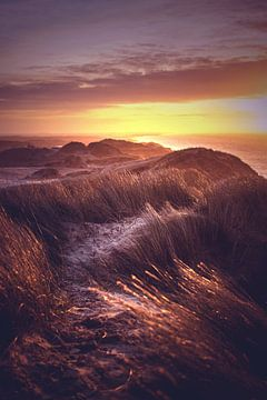 Blick über Dänemarks Dünen von Florian Kunde