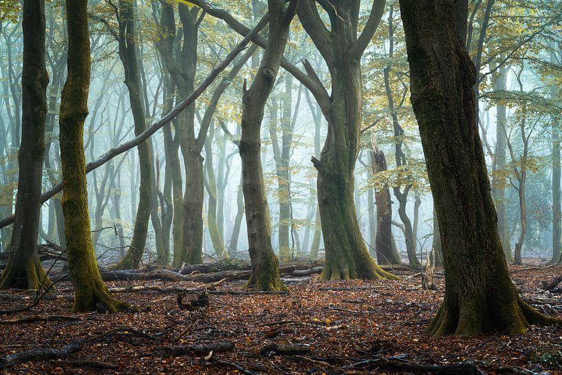 Der Beginn eines schönen Herbsttages.... von Peter Korevaar