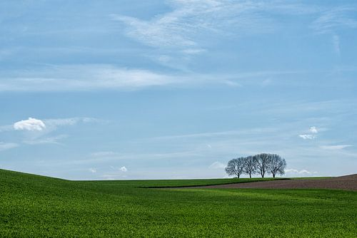 Vier bomen van Marian Smeets