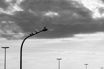 Tauben auf Lichtmast von Stefan Zwijsen