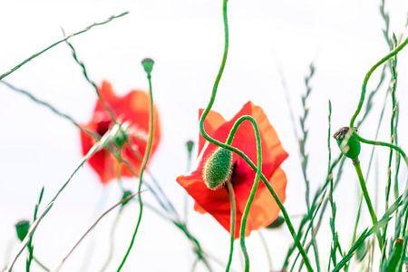 Art of nature van Niels Barto