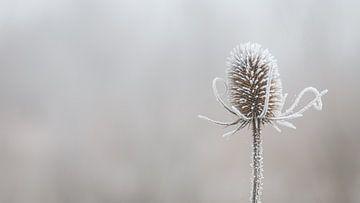 Eingefrorener Graben von ElkeS Fotografie