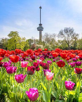Euromast met tulpen van Annette Roijaards