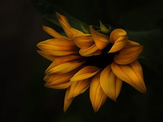 Sonnenblume van Gabriele Haase