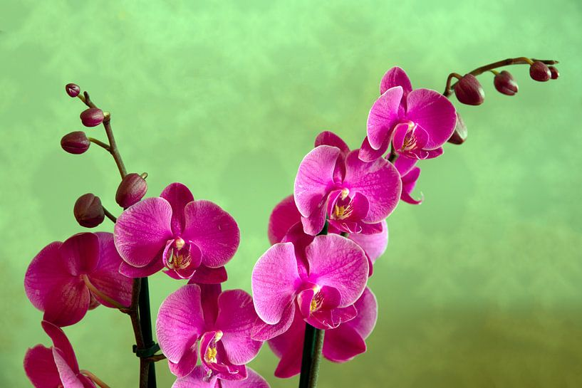 Orchidee van Jaap Mulder
