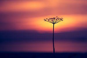 Takje voor zonsondergang van
