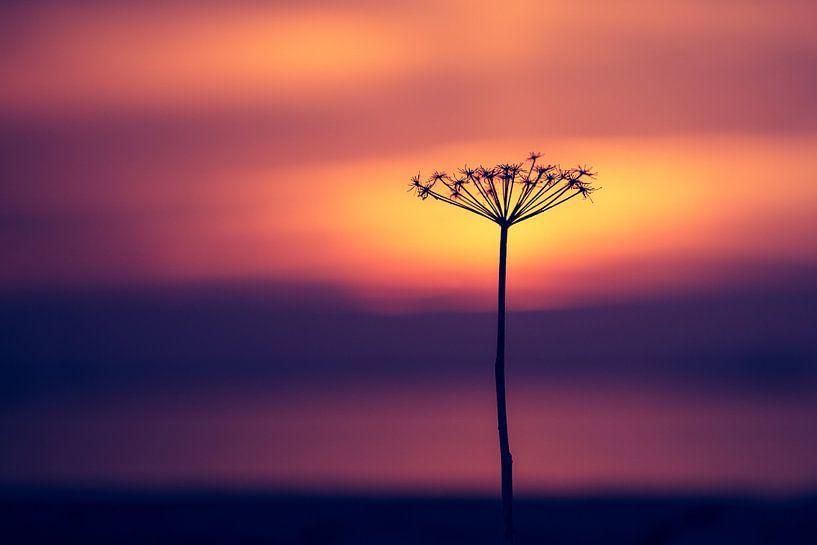 Takje voor zonsondergang van Bert Nijholt