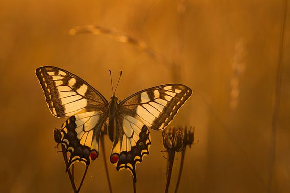Butterfly in the sunlights
