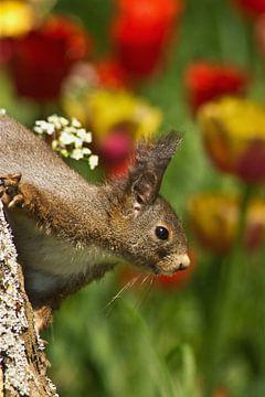 Eichhörnchen von Anja B. Schäfer