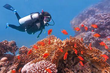 Jonge Nederlandse man duikt in zee bij koraal en oranje vissen van Ben Schonewille