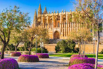 Kathedraal van Palma de Majorca, Spanje Balearen van Alex Winter