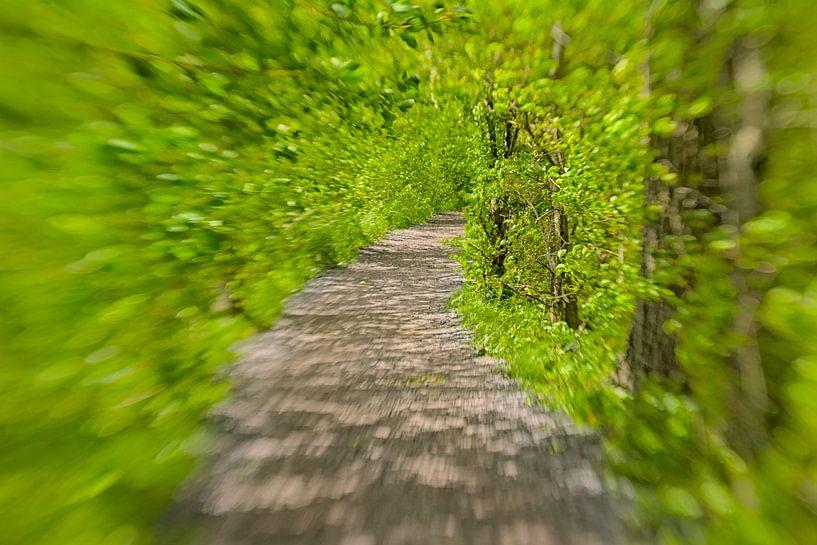 Chemin à travers un tunnel vert ensoleillé sur Kristof Lauwers