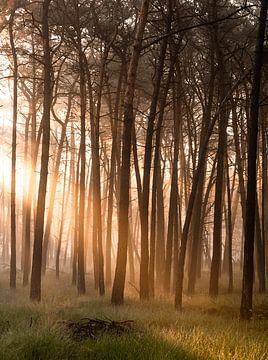 magische gouden licht bos van Enrique De Corral