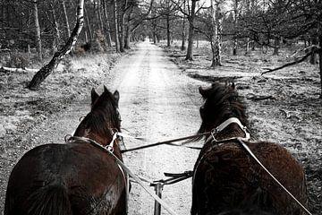 Planwagen mit Zugpferden durch die Veluwe von Sran Vld Fotografie