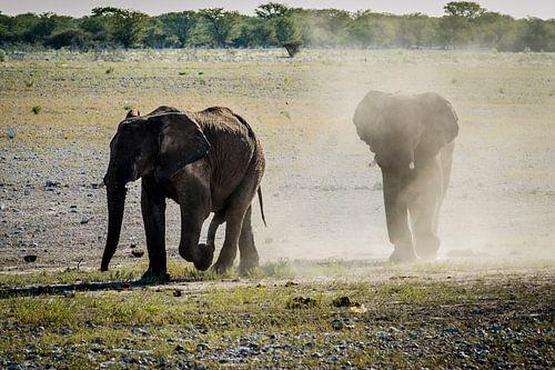 Eén of twee olifantjes?  van Sander RB