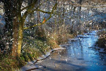 IJsvogel in de winter van ellenilli .