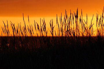 Zonsopkomst in duinen Schiermonnikoog van Margreet Frowijn