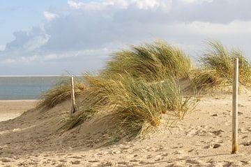 Grassduinen van Texel