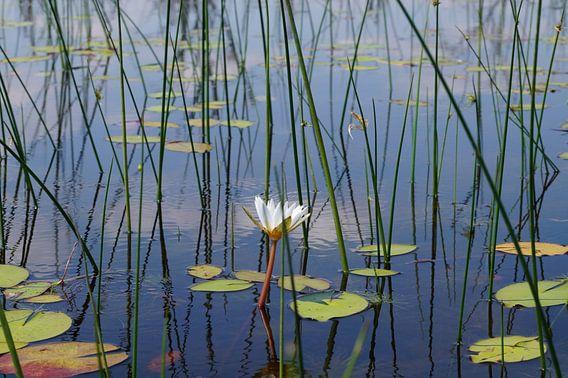 weerspiegelingen in het water